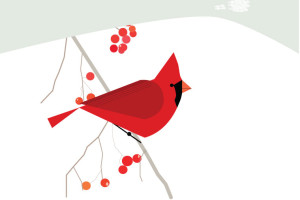 Northern-Cardinal-All